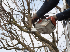 Oregon and California Tree Trimmers Insurance